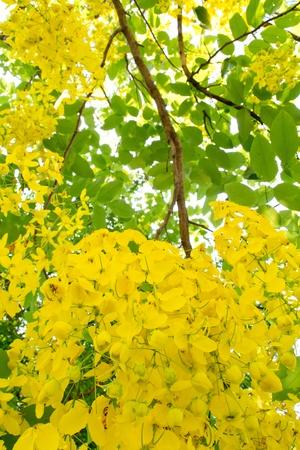 beautiful yellow colors
