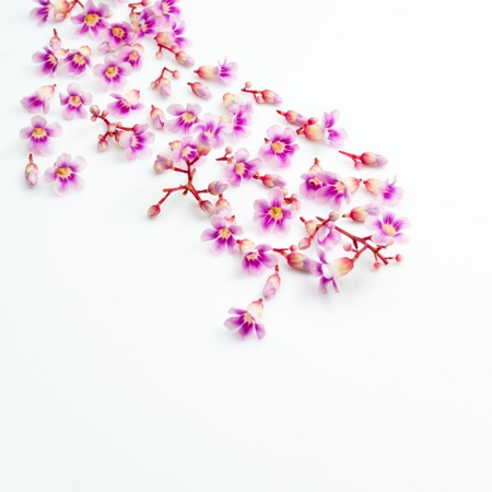 beautiful pink flowers isolated Stock Photo