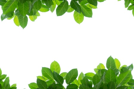 green leaves: green leaf frame isolated  Stock Photo