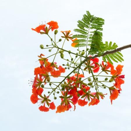 beautiful red flowers Stock Photo - 13367359