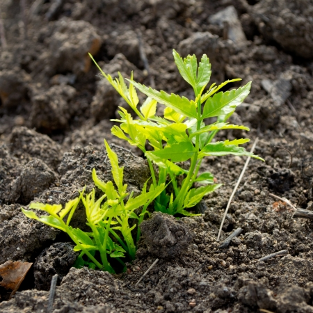 growth plants in soil Stock Photo