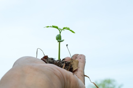 growth plants on hand with clear sky photo