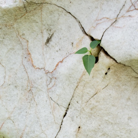 plant growth in cracked stone