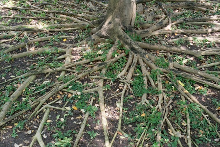 tree roots background photo