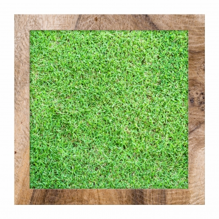 zelená tráva pozadí