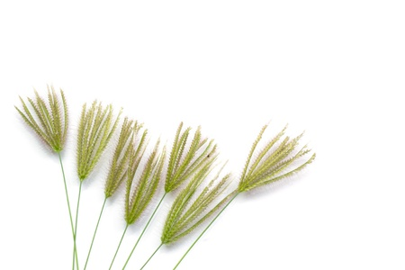 grass flowers isolated Stock Photo