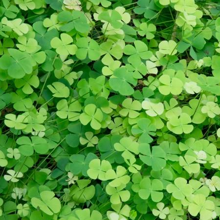 green leaf Hintergrund