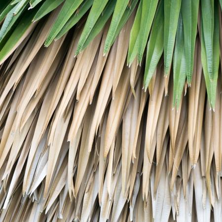 Fresh and dry palm leaf background photo