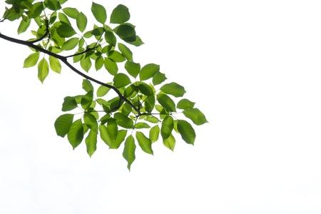 Green leaf background Standard-Bild - 14165157