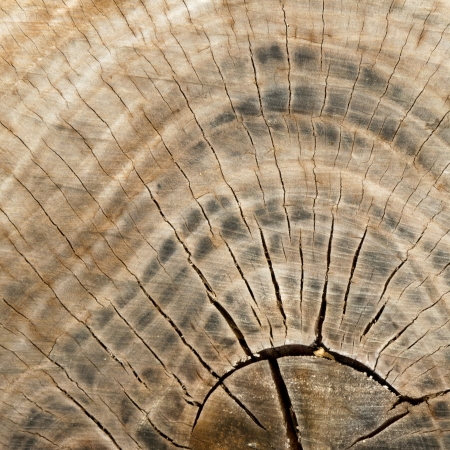 abstract wood texture Stock Photo - 14387471