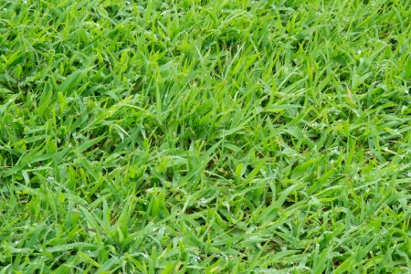 Green grass background with drops water photo