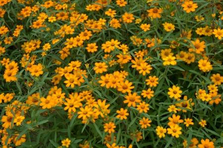 beautiful yellow blossum Stock Photo - 15744135