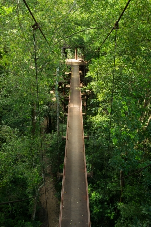 hanging walkway over the top of the trees Stock Photo