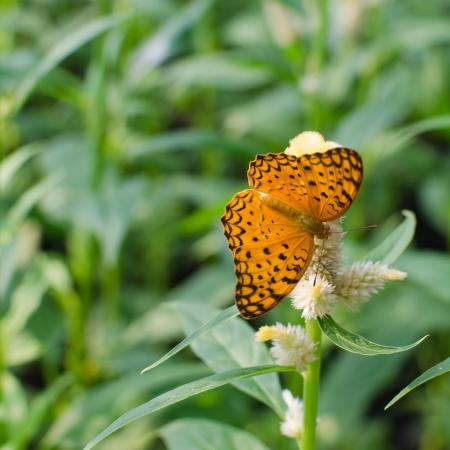 butterfly feeding on flowers photo