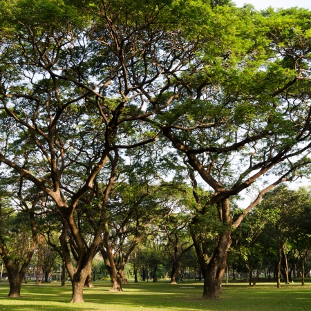 groene bomen met ochtendzon Stockfoto