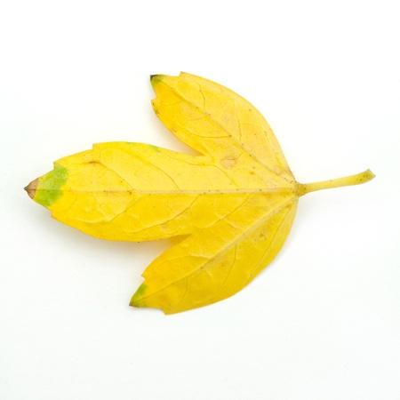 fall leaf isolated Stock Photo