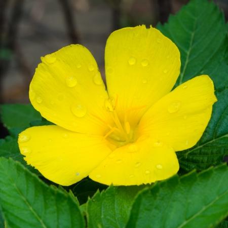unfurl: yellow flower close up Stock Photo