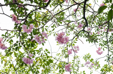 pink blossom and tree branch photo