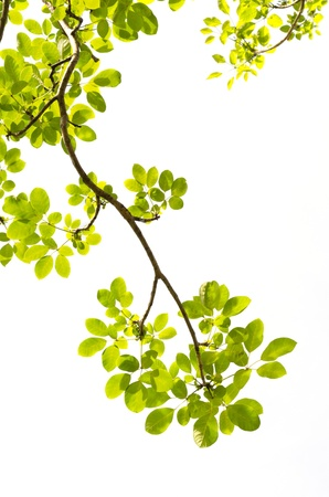 green tree branch photo