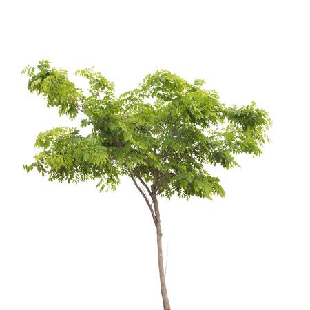 isolated tree Standard-Bild