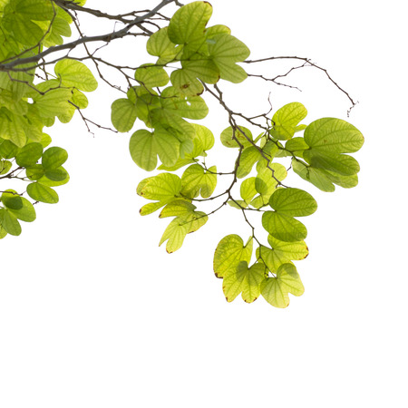 tree branch isolated Standard-Bild