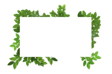 Blank white background frame with isolated tree branch frame border Standard-Bild - 111487793