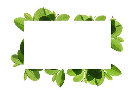Blank white background frame with isolated tree branch frame border Standard-Bild - 111487794
