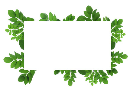 Blank white background frame with isolated tree branch frame border Standard-Bild - 111487801