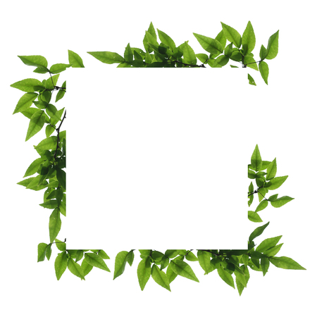 Blank white background frame with isolated tree branch frame border
