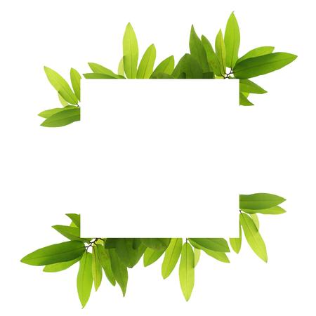 Blank white background frame with isolated tree branch frame border Standard-Bild - 111487810