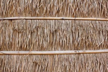 veneer: dry grass background Stock Photo