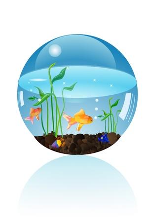 fish aquarium Stock Photo - 15663715