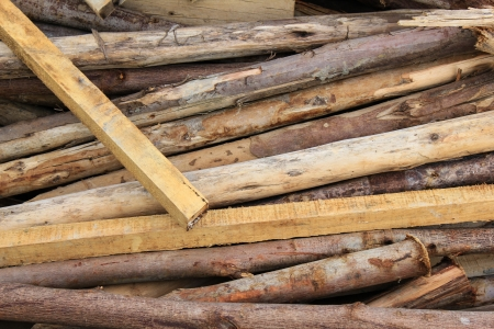thorn tip: wooden poles