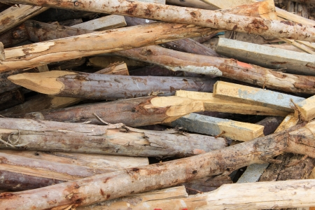thorn tip: A row of fresh cut and sharpened wooden poles
