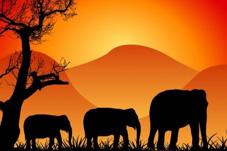 African Wildlife Background photo