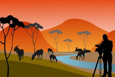 Africa or safari silhouettes of wild animals in twilight photo