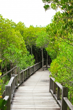 rosy cheeked:  the mangrove forest in Thailand Stock Photo