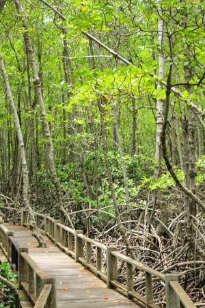 lightsome: mangrove in mangrove forest Stock Photo