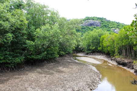 Mangrove Forest Stock Photo - 22496585