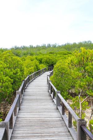 mangrove Stock Photo - 22496599