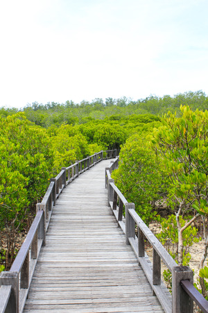 mangrove Stock Photo - 22496599