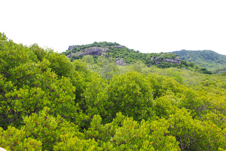 top view of the forest mangrove Stock Photo - 22496600