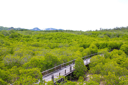 top view of the forest mangrove in Thailand Stock Photo - 22496602