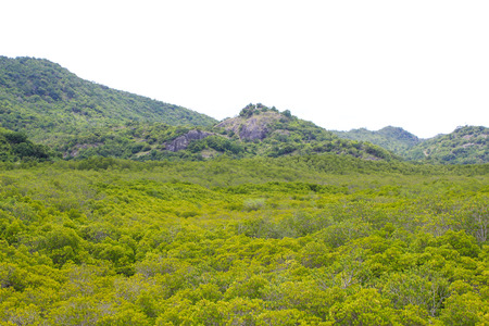 Top View of Mangrove Forest Stock Photo - 22496607
