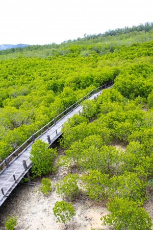 lightsome: Top View of Mangrove Forest Stock Photo