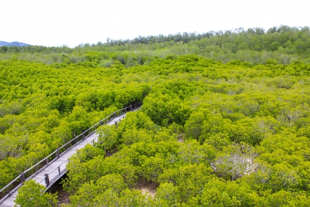 Top View of Mangrove Forest Stock Photo - 22496608