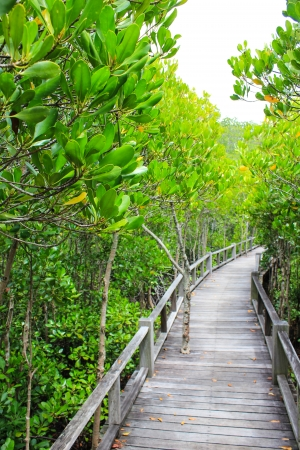 the road in the Mangrove Forest Stock Photo - 22496610