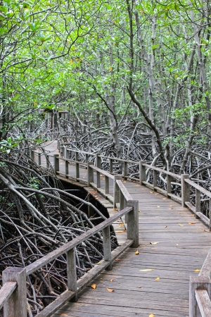 rosy cheeked: the road in the Mangrove Forest Stock Photo