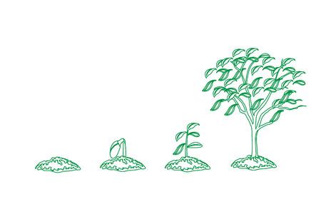 tree growth  Stock Photo