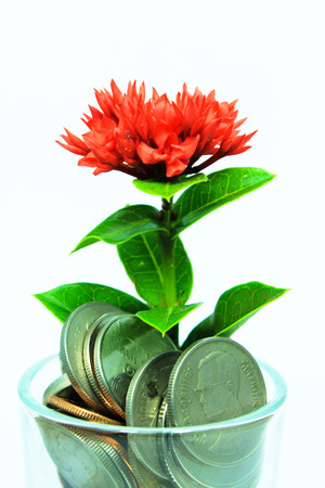 Money with red flower isolated on white background photo